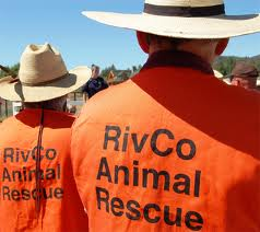 REARS (Riverside Emergency Animal Rescue Service) orientation meeting for new rescue people, January 30th at 9am.